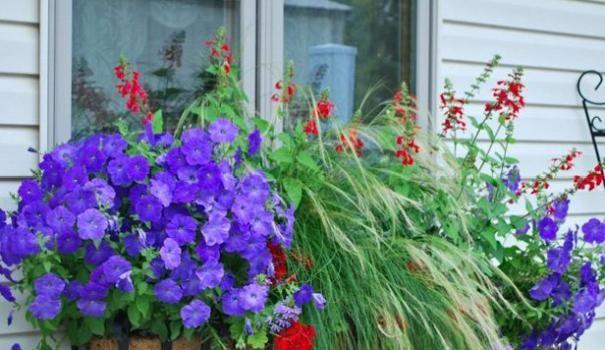 Прикраса вікон квітами зовні