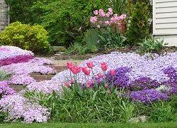 Прикраси саду: миксбордери з багаторічників