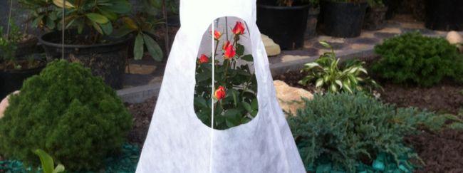 Укриття троянд на зиму