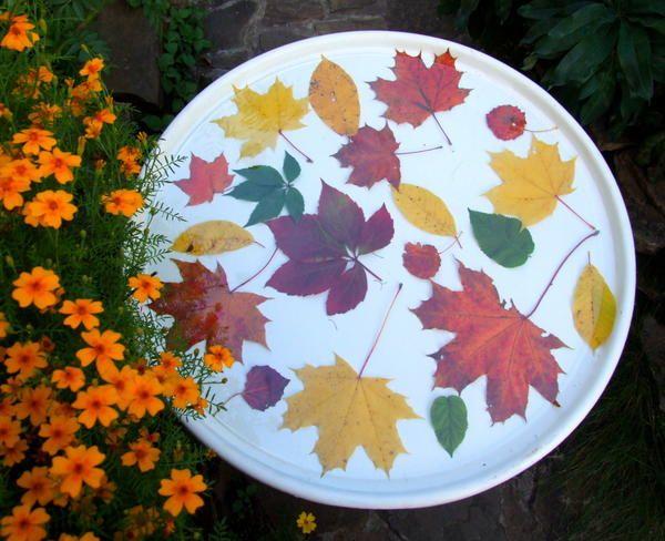 Та ж стільниця, декорована в техніці гербарію