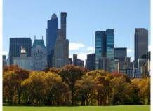 У Центральному парку Нью-Йорка скоро будуть рости лише генетичні копії