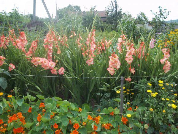 Вальс квітів-сад