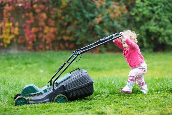 Ваша перша зелена галявина газон для початківців - найважливіші поради