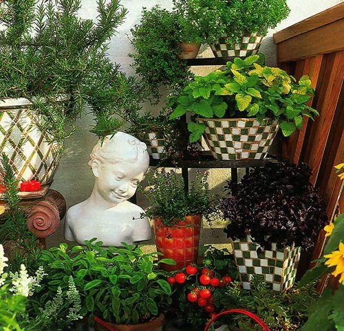 Види кімнатних рослин для правильного догляду за ними