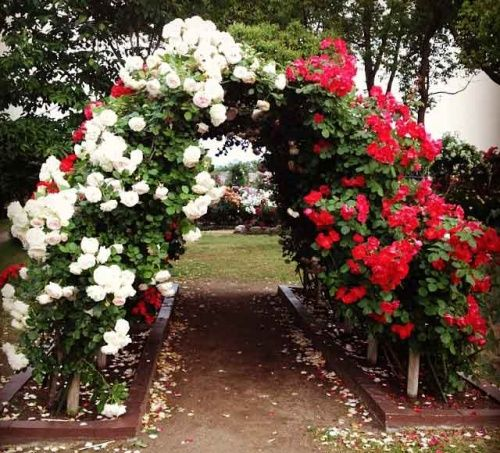 Види опор, які використовуються в дизайні саду
