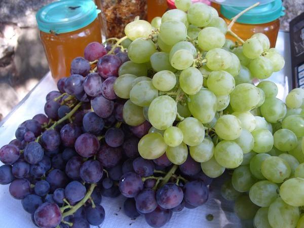 Виноград - одна з найкорисніших ягід для людини