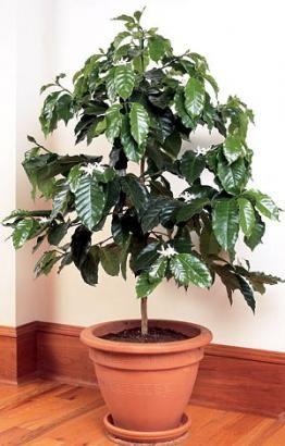 Вплив кімнатних рослин на людину