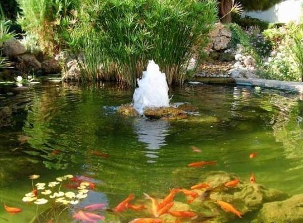 Ставок з фонтаном і рибками