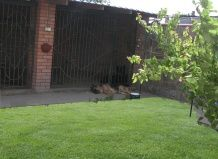 Вольєр для собаки на садовій ділянці