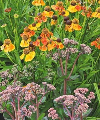 Чарівна рапсодія багаторічних квітників