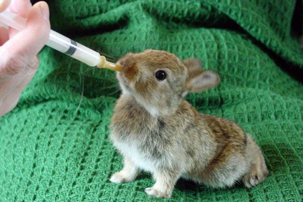 Чи можливо виокремити кроленят без кролиці?