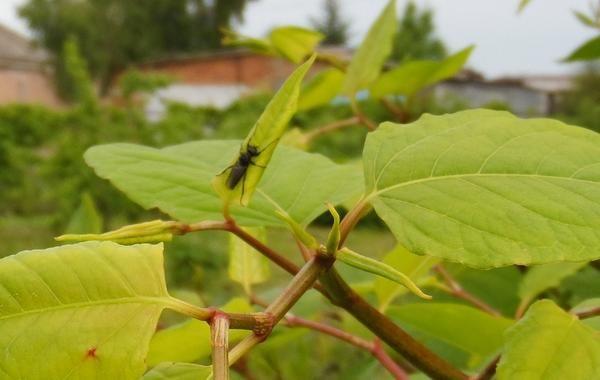Шкода від комах