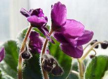 Шкідники кімнатних рослин і квітів