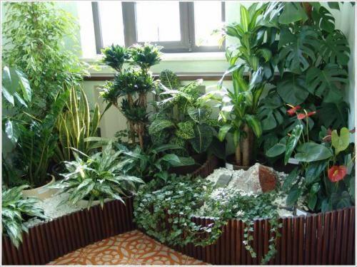 Вредітелті кімнатних рослин в грунті - пальми