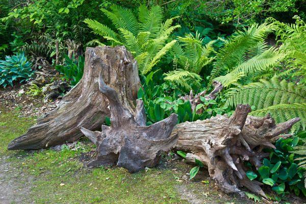Час збирати коріння, або як створити рутар на дачній ділянці