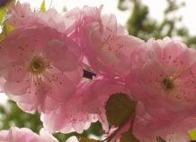 Всі види квіткових горщиків: від керамічних до пластикових