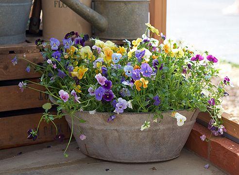Друге життя старих речей: все в сад