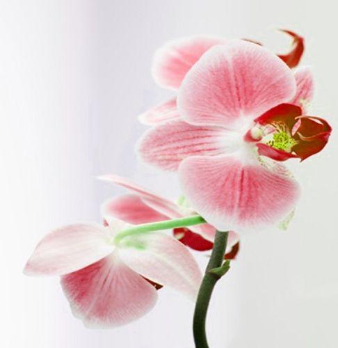 Вибираємо букет нареченої з орхідей