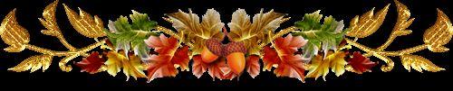 Вибираємо квітка листопада
