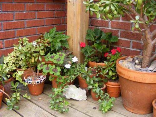 Рослини в горщиках