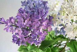 Холодний фарфор: квіти бузку своїми руками