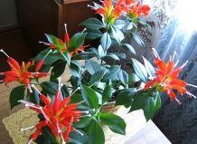 Вибираємо кімнатні рослини