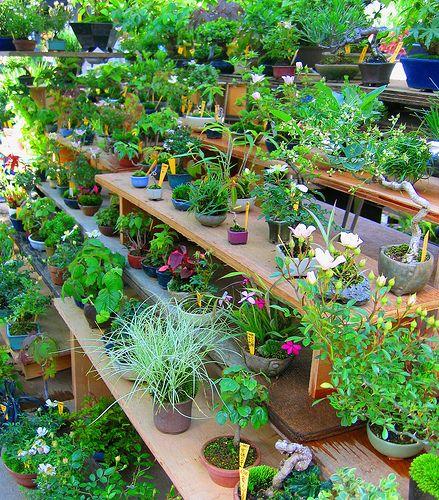 Навіщо потрібен список кімнатних рослин