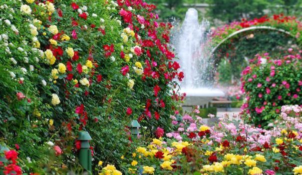 Закономірності створення квітника