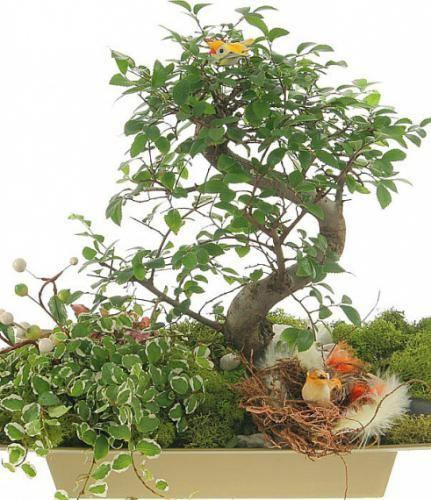 Привабливі поширені кімнатні рослини для початківців