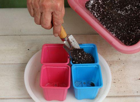 Розмноження заміокулькаса живцюванням. Підготовка ґрунту.