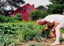 Заняття садівництвом зберігає молодість і здоров`я