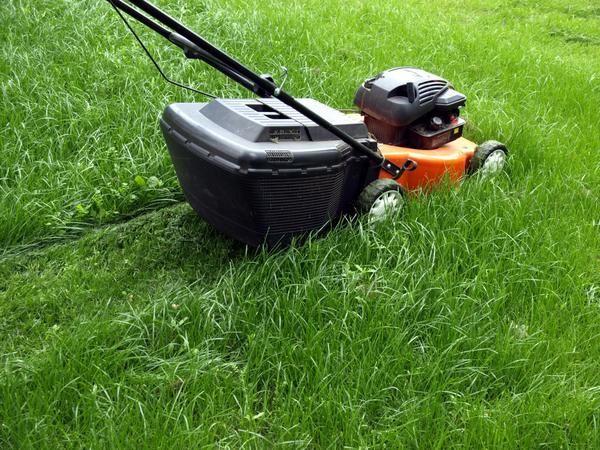 Зелений газон - на весь дачний сезон