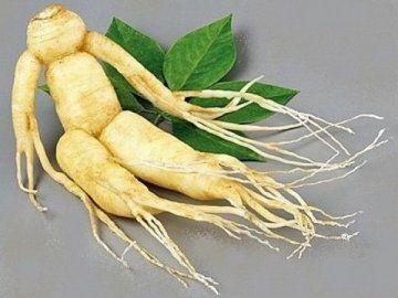 Женьшень справжній - дивовижне лікарська рослина