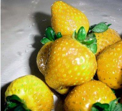 жовта полуниця