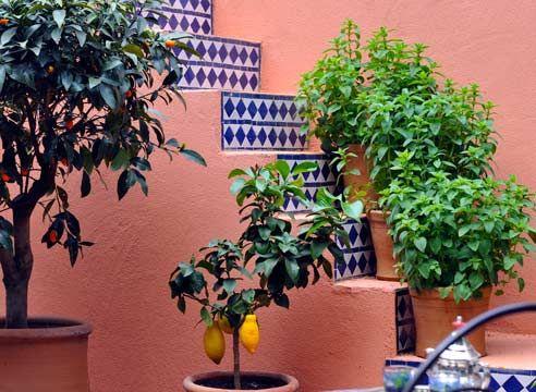 Кімнатні рослини в інтер`єрі