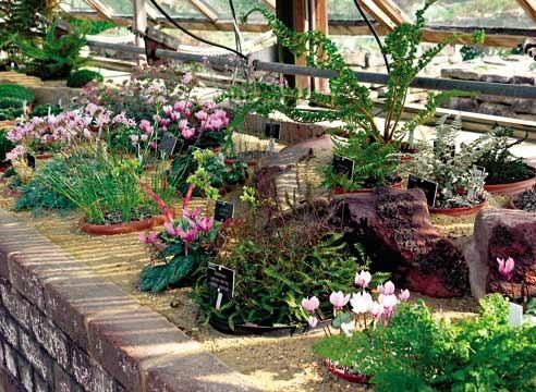 Науково-ботанічний сад