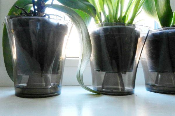 полив орхідеї