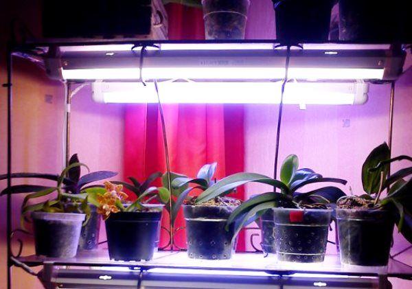 лампа для орхідей