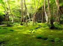 Знаменитий храм моху в кіото